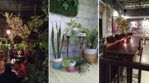 tanaman-interior-indoor-garden